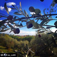 #Repost @ba_co89  #picoftheday #trasimenolake #ig_perugia #igworldclub #olive #oliodoliva #raccolto #raccoltadelleolive #nature #instanature #ariapulita #rebirth #sanmarco #sanmarcoperugia #orto #instagood #instalike #instamood #italy #italia #umbria #igersumbria #sky #leaves #oldlife #emotions #melancholy
