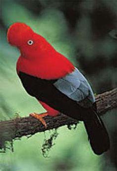 Parque Nacional y ANMI Amboró