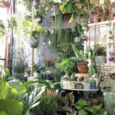 indoor plants, minimalist home Room With Plants, House Plants Decor, Plant Rooms, Indoor Garden, Indoor Plants, Home And Garden, Plantas Indoor, Plant Aesthetic, Green Rooms