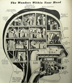 The wonders Within Your Head - This infographic provides a visual to show how the different parts of the brain function. The infographic illustrates the brains nose and throat functions in Lamen's terms so that it is clear to the reader Effective Leadership, Psy Art, Your Head, Your Brain, Human Body, Human Head, Images, Mindfulness, Painting