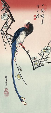 歌川広重 広重花鳥大短冊撰 白梅に寿帯鳥