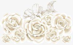 La rose blanche, Vecteur Rose Mer, La Mer En Matière De Vecteur De Roses, Les Roses De La Mer De MatériauPNG et vecteur