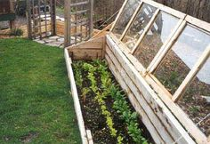 cedar cold frame - i like the long frame with multiple lids, sharing a common row - seems most efficient!  ************************************************  sacred1earth, via Flickr - #garden #cold #frame