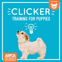 Want to train your puppy using positive reinforcement? Try puppy clicker training!