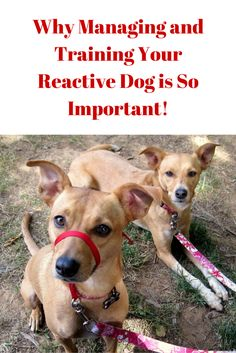 http://zoephee.blogspot.com/2015/08/why-managing-training-your-reactive-dog.html