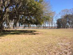 Plantation field, river, marsh