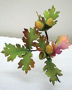Oak tree leaves & acorns