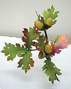 Oak tree leaves & acorns