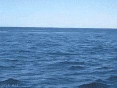 Epic whale jump
