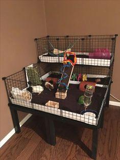trendy ideas for pet store ideas guinea pigs - Pin Hairs Guinea Pig Hutch, Guinea Pig House, Pet Guinea Pigs, Guinea Pig Care, Pet Pigs, Indoor Guinea Pig Cage, Guinie Pig, Pig Habitat, Rat Cage