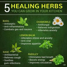 herbs for recovery, Best and effective Herbs to treat various diseases and health conditions Natural Health Remedies, Herbal Remedies, Home Remedies, Healing Herbs, Medicinal Herbs, Natural Herbs, Natural Healing, Natural Medicine, Herbal Medicine