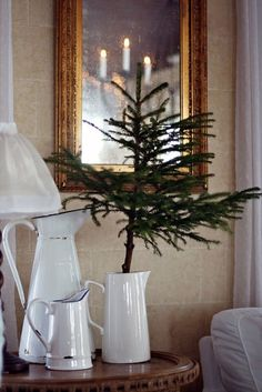 Norfolk pine in enamelware pitcher from IKEA - pitchers are very inexpensive!  Great look!!!