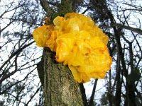 Brain Fungus!