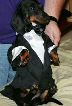 doxie in a tux For Maxwell Moore!! Something to make for The Diesel Dog!
