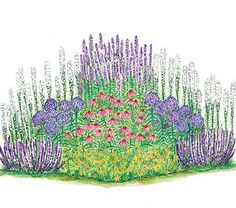 Pollinator Garden for Sun--plant adjacent to veggie raised beds to encourage pollination.