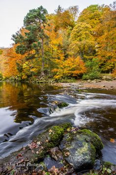 Fall colors in the Gorge of the River Allen, Northumberland, England