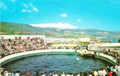 1950's Marineland of the Pacific in Palos Verdes California.