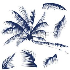 palm tree: Vector isolated image of a coconut tree with some leaves