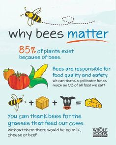 What is pollination? diagram for kids | Bees & Honey | Pinterest ...