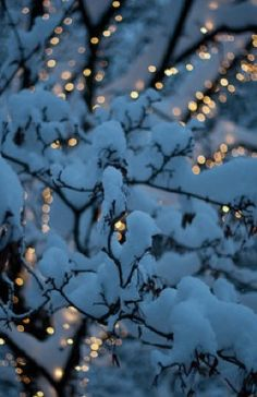 Covered with Christmas lights beneath the snow in winter Merry Christmas, Blue Christmas, Winter Christmas, Christmas Lights, Christmas Time, Winter Holidays, Christmas Stuff, Beautiful Christmas, Christmas Ideas