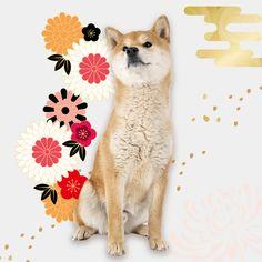 #sushi #動物系バナー #cute #かわいい #お寿司 #キャンペーン #特集 #特集バナー #犬 #動物 #animal #dog #dogs #summer #portfolio #banner #制作実績 #バナー制作 #バナー作成 #webデザイン #デザイン勉強 #webdesign #ポートフォリオ #アイキャッチ #icon #image #campaign #cat #present #simple #柴犬 #和風 #犬系 #猫系 #ペット #ペットバナー Animals, Animales, Animaux, Animal, Animais