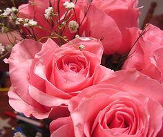 Mais rosas