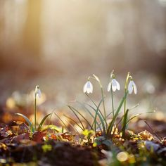 winter turning into spring..each little bloom is awakened every morning by a faery kiss..