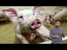 Vlastivěda - Kraj Vysočina - YouTube Youtube, Animals, Animales, Animaux, Animal, Animais, Youtubers, Youtube Movies
