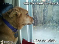 Have you ever seen a little rain make a dog so very sad?