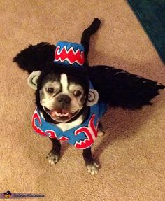 Flying Monkey - 2012 Halloween Costume Contest