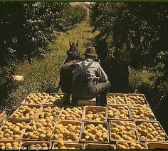 Rare Color photographs from the Great Depression via the Library of Congress