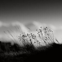 amazing shot > Black Point Grass by Alexei Krasnikov, via Flickr