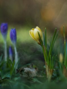 spring in my garden :-) by Halina http://500px.com/photo/100423913
