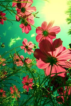 'sun shine and pink flowers