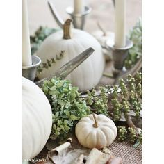 White Pumpkin Centerpiece ❤ liked on Polyvore featuring home, home decor, white hydrangea centerpiece, pumpkin centerpieces, fall home decor, autumn home decor and white home accessories
