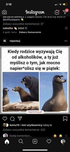 Polish Memes, Pokemon, Meme Lord, Stranger Things, Ss, Jokes, Kpop, Humor, Funny