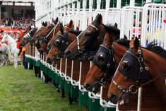 Horses waiting to run at the Racetrack.