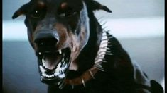 With Tenor, maker of GIF Keyboard, add popular Angry Dog animated GIFs to your conversations. Doberman Dogs, Doberman Pinscher, Dobermans, Chien Dobermann, Scary Dogs, Wolf, Dog Teeth, Dog Barking, Sleeping Dogs