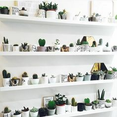 Using gallery shelves to house a growing cacti collection