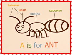 Letter A is for Ant lesson and craft for Preschool Science Activities, Preschool Curriculum, Preschool Themes, Science For Kids, Homeschooling, Alphabet Activities, Preschool Classroom, Science Fair, Science Experiments