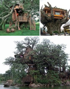 Wow. Sick treehouse...