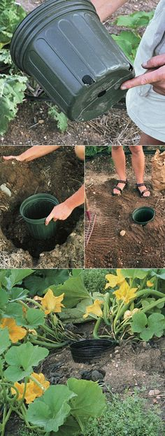DEEP ROOT WATERING made easy.not just for growing squash ;) Tips for growing squash, Place the seeds AROUND the pot. When you water, you water inthe pot so the water comes out of the drain holes around the bottom for deep root watering. Diy Garden, Edible Garden, Dream Garden, Lawn And Garden, Garden Projects, Garden Landscaping, Garden Club, Herbs Garden, Shade Garden
