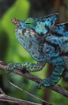 Nigel Dennis Wildlife Photography : African Reptiles