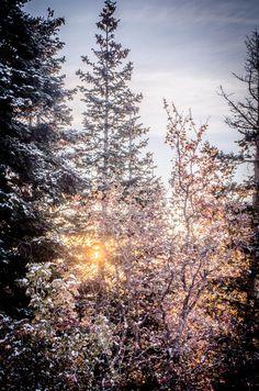 Winter Mornings, Utah
