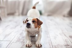 Looking for another way to spend quality time with your beloved canine companion? Then look no further than dog yoga. Cute Names For Dogs, Pet Names, Cute Dogs, Baby Girl Names Uncommon, Dog Travel Carrier, Dog Safety, Family Dogs, Dog Care, Dog Grooming