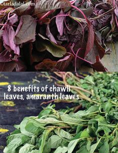 Benefits of Chawli Leaves, Amaranth Leaves Amaranth Benefits, Low Calorie Vegetables, Veggies, Calcium Rich Foods, Eye Sight Improvement, Edible Garden, Learn To Cook, Winter Food, Green Leaves