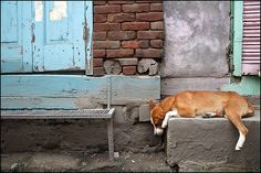 Maciej Dakowicz I Like Dogs, Srinagar, Animal House, Best Friends, Pets, India, Facebook, Street, Photography