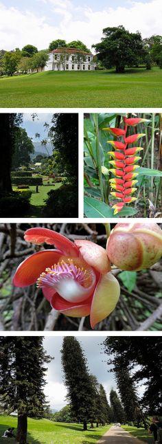 The Royal Botanical Garden of Peradeniya, Kandy, Sri Lanka Floral Dresses, Kandi, Pin Image, Botanical Gardens, Sri Lanka, Traveling By Yourself, Asia, Holiday, Plants