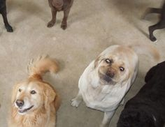 This dog who refused to take a good family picture.   The 40 Most Awkward Dogs Of 2013