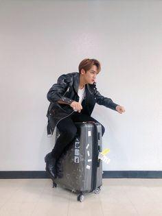 Kim Mingyu-ssi, what are you doing? Wonwoo, Jeonghan, The8, Seungkwan, Seventeen Memes, Mingyu Seventeen, Seventeen Debut, Dino Seventeen, Vernon